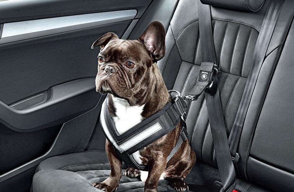 Skoda представила ремень безопасности для собак