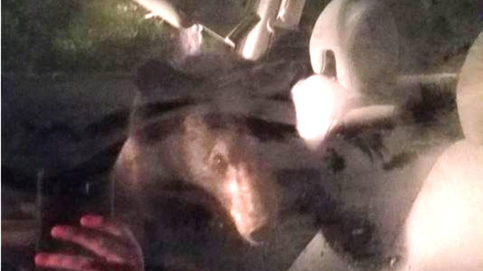 Медведь забрался в «Хонду», закрыл дверь и побибикал